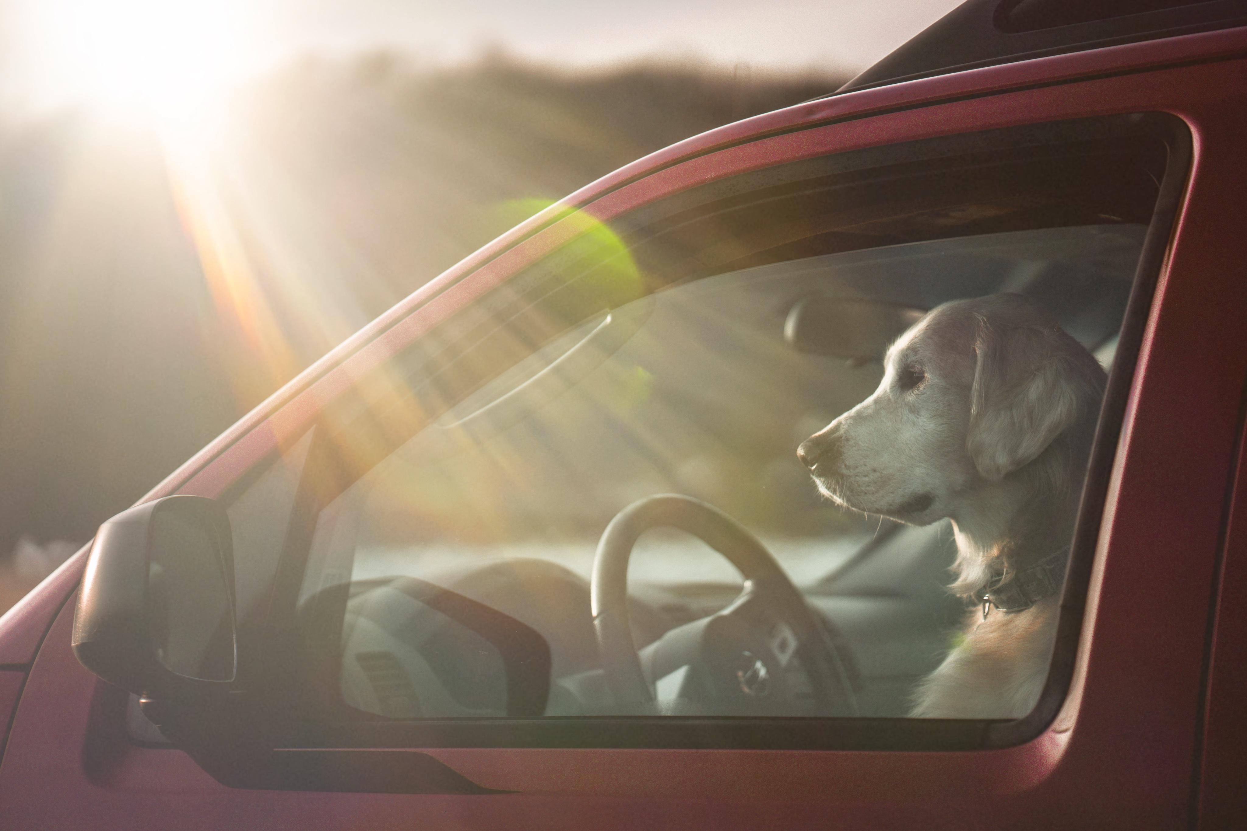 chien-voiture-danger
